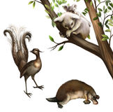 Australische Tiere: Koala, platypus und Lyrebird. Stockfotografie