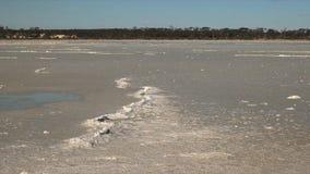 Australische WestSalzpfanne summen herein laut stock video footage