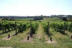 Australische wijngaard Stock Foto