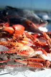 Australische Zeevruchten Stock Foto