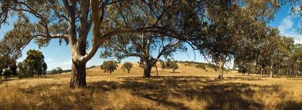 Australischer Bauernhof Stockbilder
