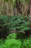 Australischer Bush Stockbilder