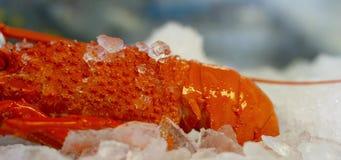 Australischer Hummer auf Eis stock video footage