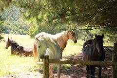 Australischer Pferdebauernhof lizenzfreies stockbild