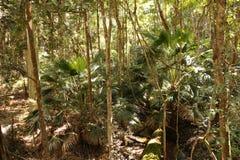 Australischer Regenwaldweg Lizenzfreie Stockbilder