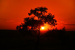 Australischer Sonnenuntergang Lizenzfreies Stockbild