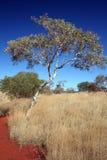 Australisches Hinterland Stockbild