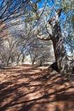 Australisches Hinterland, Nordterritorium, Australien Lizenzfreies Stockbild