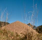 Australisches Stierameisennest mit Horizont des blauen Himmels Lizenzfreie Stockbilder