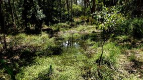 Australisches Sumpfgebiet, wie von einer kleinen Brücke gesehen lizenzfreie stockfotografie