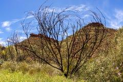 Australisk öken, konungkanjon, nordligt territorium, Watarrka nationalpark, Australien royaltyfri foto