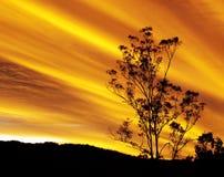 Australisk höstsolnedgång med eukalyptusträdkonturn Arkivbilder