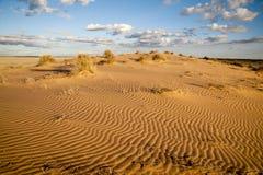 Australisk öken Arkivfoto