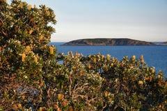 Australisk kustlinjeMuttonbird ö fotografering för bildbyråer