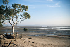 Australisk sandig shoreline med trädet Royaltyfri Foto