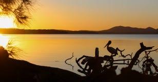 Australisk solnedgång på Myall sjöarna arkivbild