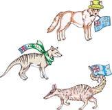 Australiska djur - dingo, thylacine, numbat Royaltyfri Fotografi