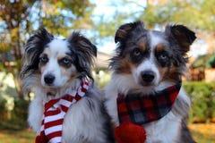 Australiska herdar som bär vinterScarves Royaltyfri Bild