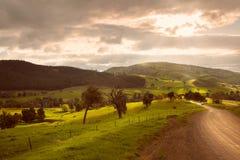 australites Стоковые Изображения RF