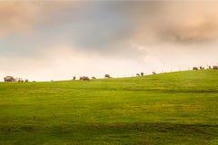 australites Стоковая Фотография RF