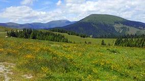 Austria alps spring time. Austria alps - mountains, forest, flowers Royalty Free Stock Photo