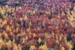 Austria: Autumn colours Royalty Free Stock Photography