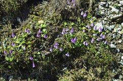 Austria, Botany Stock Images