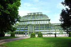 austria domowy palmowy Vienna Obrazy Stock