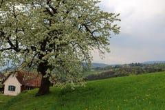 Austria Landscape. Landscape of Styria in Austria Stock Image