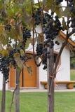 austria lochu wino Obraz Stock