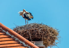 Austria, rust. nest of a stork Stock Photography