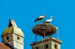 Austria, rust. nest of a stork Stock Images