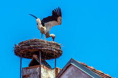 Austria, rust. nest of a stork Royalty Free Stock Photography