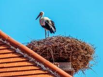 Austria, rust. nest of a stork Stock Photo