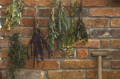 Austria, Salzburger Land, Dried herbs on brick wall, close up Royalty Free Stock Images