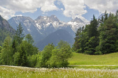 Austria Summer Mountain Landscape. This image is taken in the market town Lofer in the Salzburg region in Austria. It shows countless flowers on the meadow with Stock Photos