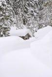 Austria, tierra de Salzburger, cabaña de madera en paisaje nevado Fotos de archivo libres de regalías
