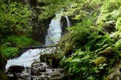 Austria, Tyrol, natura Fotografia Royalty Free