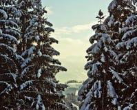 Austria, valley winter landscape between fir trees Royalty Free Stock Photos