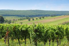Austria vineyard Royalty Free Stock Images