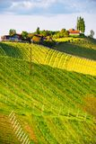 Austria Vineyards Leibnitz area south Styria travel spot. Original image. Austria Vineyards Sulztal Leibnitz area south Styria, wine country. Sunny landscape of royalty free stock photo
