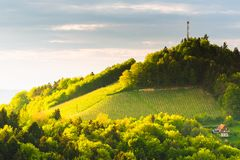 Austria Vineyards Leibnitz area south Styria travel spot. Original image. Austria Vineyards Sulztal Leibnitz area south Styria, wine country. Sunny landscape of stock photo