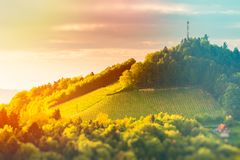 Austria Vineyards Leibnitz area south Styria travel spot. Vivid. Austria Vineyards Sulztal Leibnitz area south Styria, wine country. Sunny landscape of famous stock images