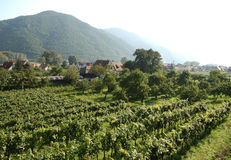 Austria | Wachau. Wachau - one of the world famous wine regions in Europe Royalty Free Stock Images