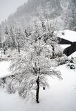 Austria winter scene. Tree and houses in snow Royalty Free Stock Photos