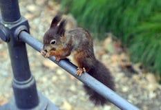 Austria, Zoology Royalty Free Stock Photos