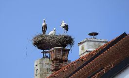 Austria, Zoology, Stork. Austria, three young storks in nest on roof top Royalty Free Stock Image