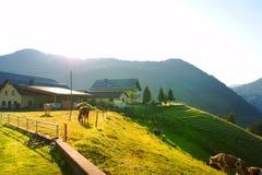 Austriaco de la naturaleza Imagen de archivo
