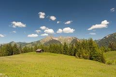 Austrian Apls Stock Image