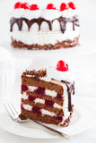 Austrian Black Forest cake. Royalty Free Stock Images